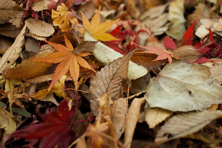 Fall Home Maintenance Schedule